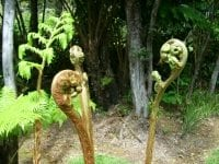 Photo of large plant in forest