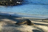 Photo of turtle on beach
