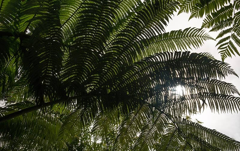Chalet Kilauea Hotel Ferns