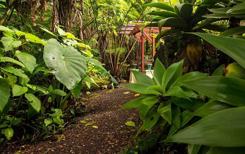 Chalet Kilauea Hotel Path