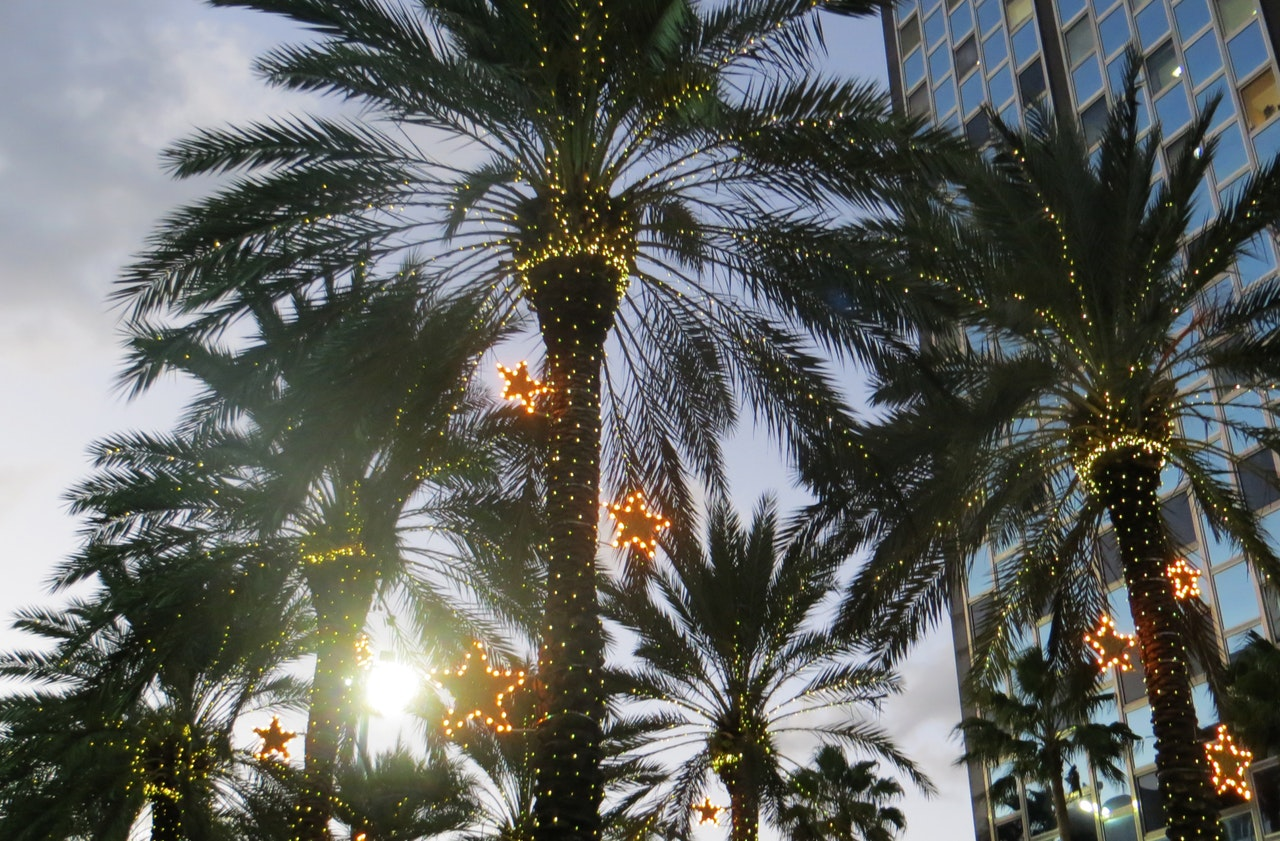 christmas palm trees